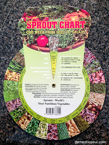 How To Sprout Lentils from domesticsoul.com