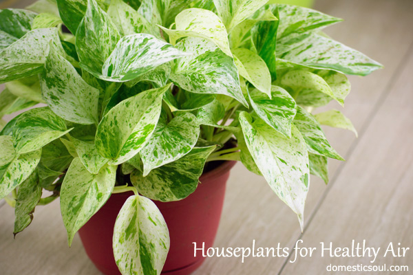 House plants for healthy air domestic soul - Healthiest houseplants fresh air delight ...