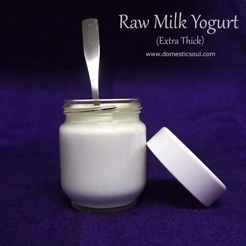 Recipe for Raw Milk Yogurt - Extra Thick